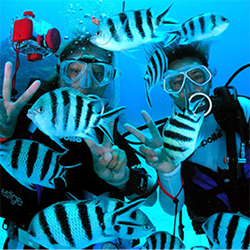 PADI Open Water with PADI Drysuit and PADI Enriched Air Specialities. Normally 778