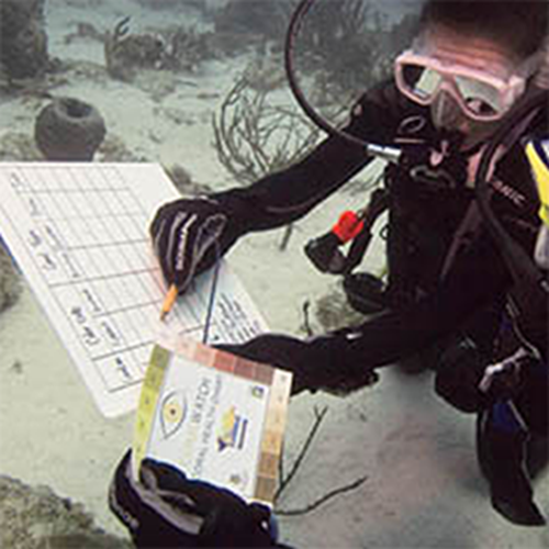 PADI Search and Recovery Course Voucher