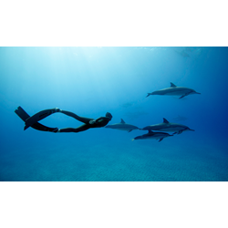 Advanced Freediver (excludes Material)