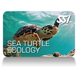 Seaturtle Ecology