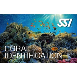 Coral Identfication