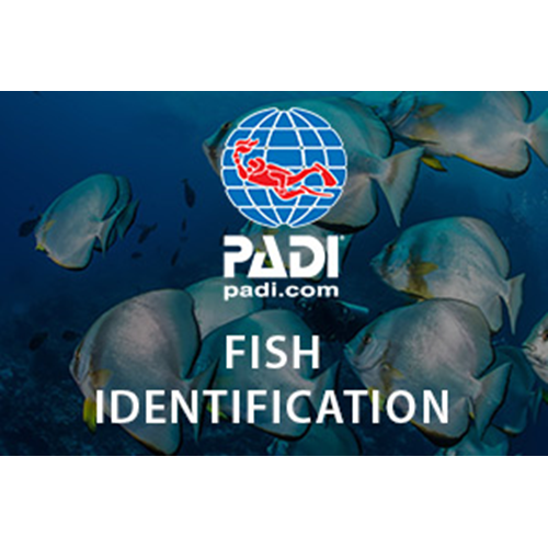 AWARE - Fish Identification Course